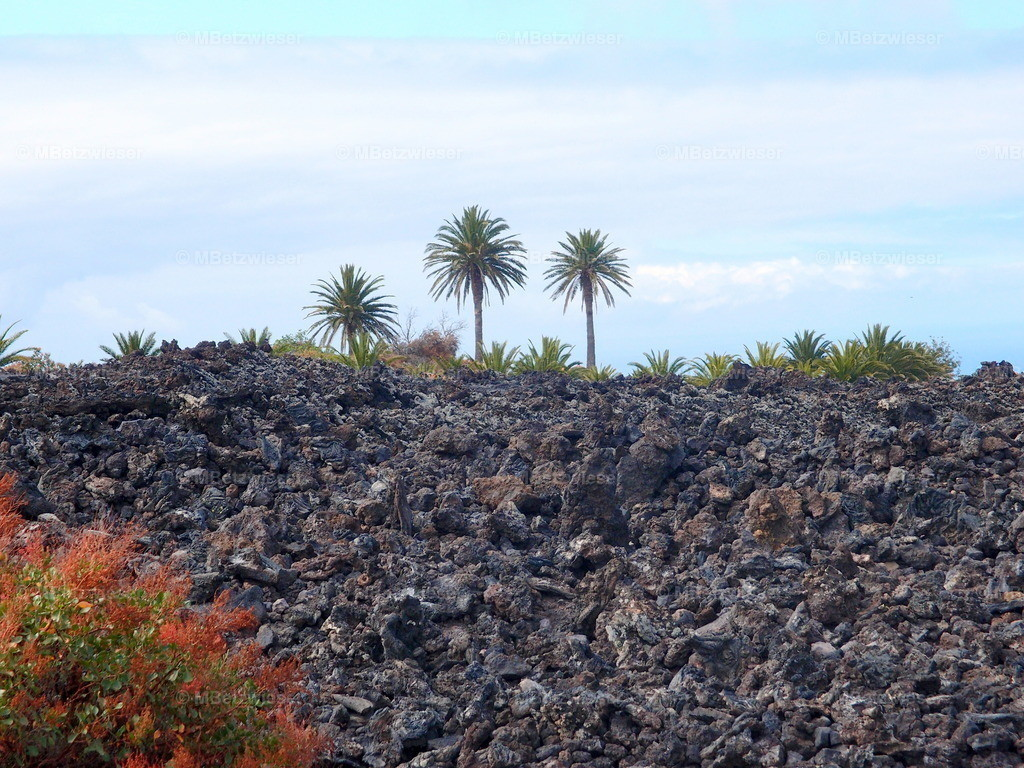 P4155147 | Im Lavafeld wächst nichts mehr