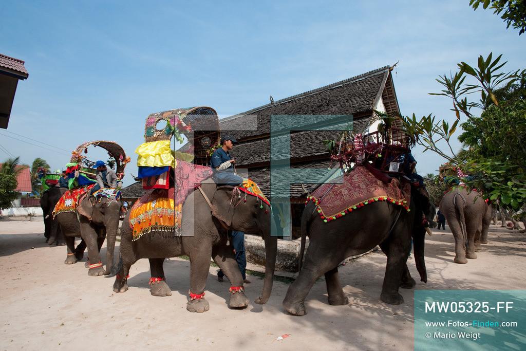 MW05325-FF | Laos | Provinz Sayaboury | Vieng Keo | Reportage: Pey Wan im Elefantendorf | Elefanten umrunden den Dorftempel.  Der achtjährige Pey Wan lebt im Elefantendorf Vieng Keo im Nordwesten von Laos. Im Dorf wohnen ca. 500 Leute mit 17 Arbeitselefanten. Sein Vater Hom Peng hat einen 31 Jahre alten Elefantenbullen namens Boun Van, mit dem er im Holzfällercamp im Dschungel arbeitet. Zum Elefantenfest schmückt Pey Wan den Jumbo und darf mit ihm an der Prozession durchs Dorf teilnehmen. Pey Wan möchte, wie sein Vater, später auch Elefantenführer werden.   ** Feindaten bitte anfragen bei Mario Weigt Photography, info@asia-stories.com **