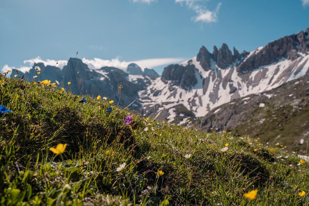 Bergblumen in den Dolomiten | Bunte Blumenwelt mit schneebedeckten Bergen in den Dolomiten