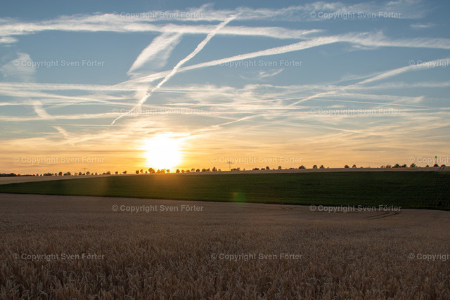 Grain field in the Thuringian basin at sunset | Grain field in the Thuringian basin at sunset