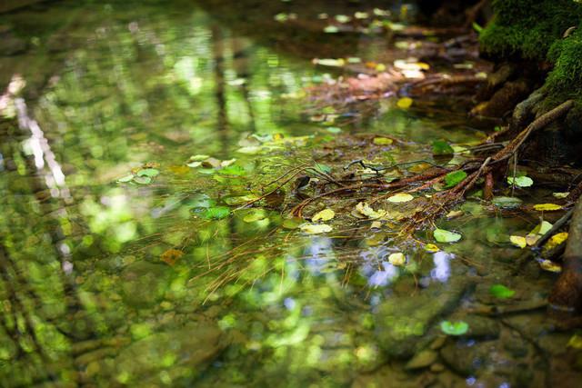 Herbstidylle am Bachufer | Baumwurzel im Wasser vom Herbstlaub umgeben