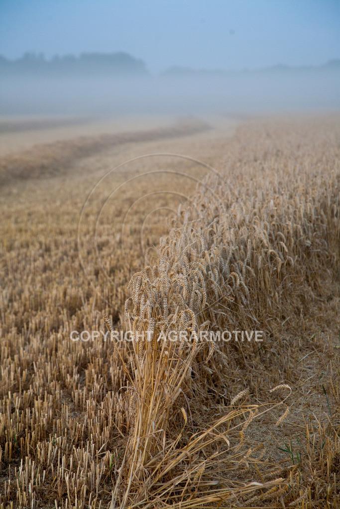 20120817-_MG_8748 | Weizenernte in der Dämmerung