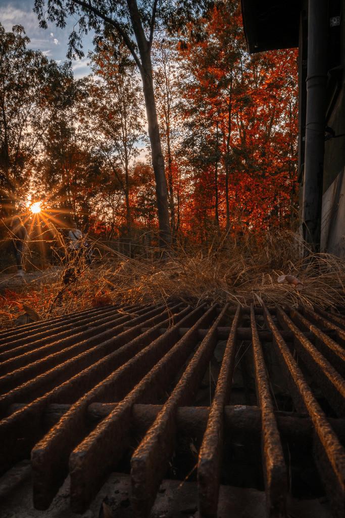 Sonnenstern im Herbst