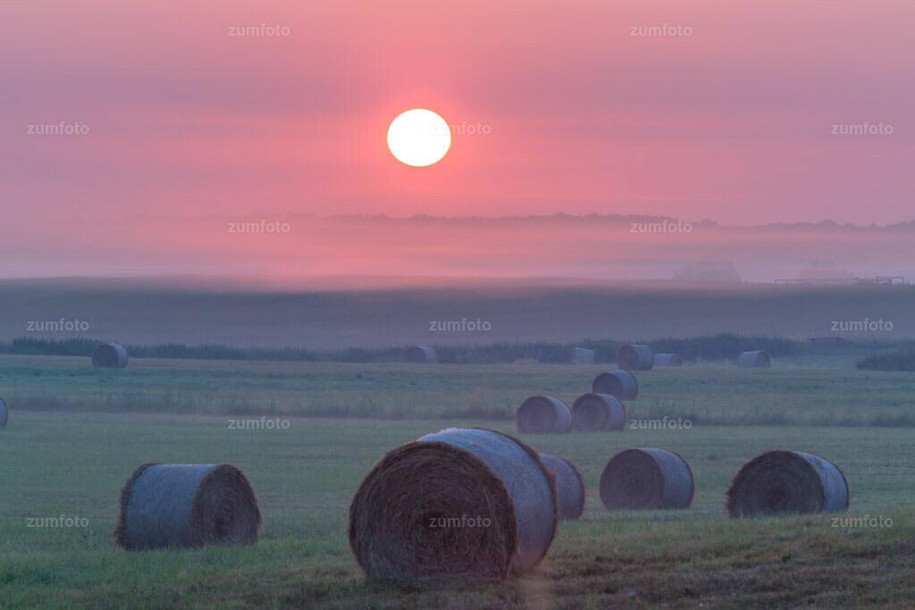 0-130726_0432 | --Dateigröße 5760 x 3840 Pixel-- Sonnenaufgang über Koppel mit runden Heuballen