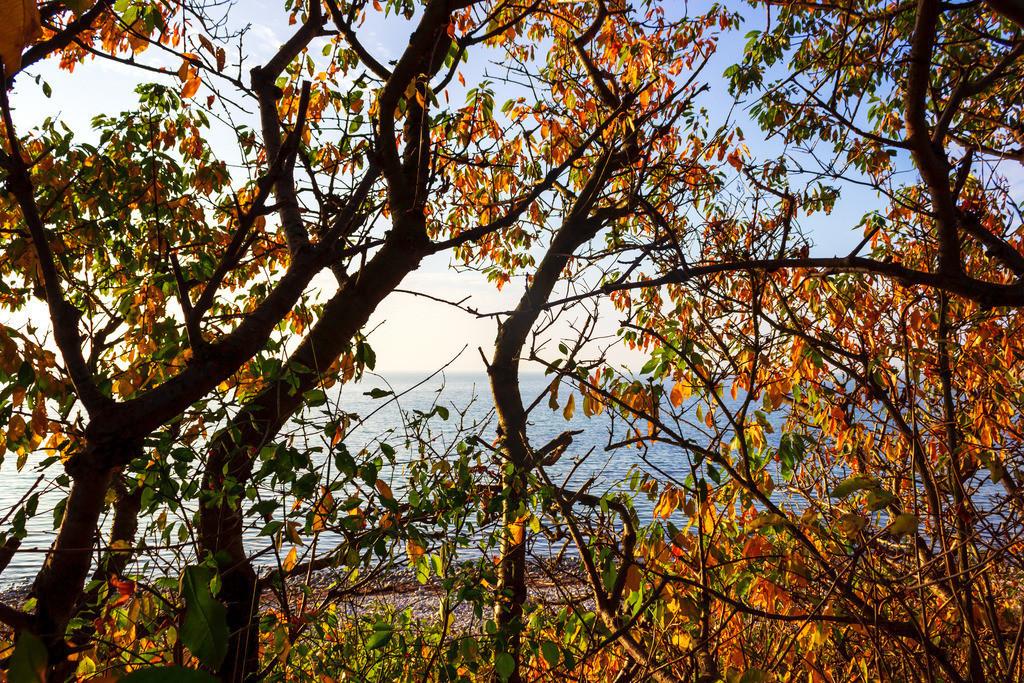 Steilküste in Hökholz | Steilküste in Hökholz im Herbst
