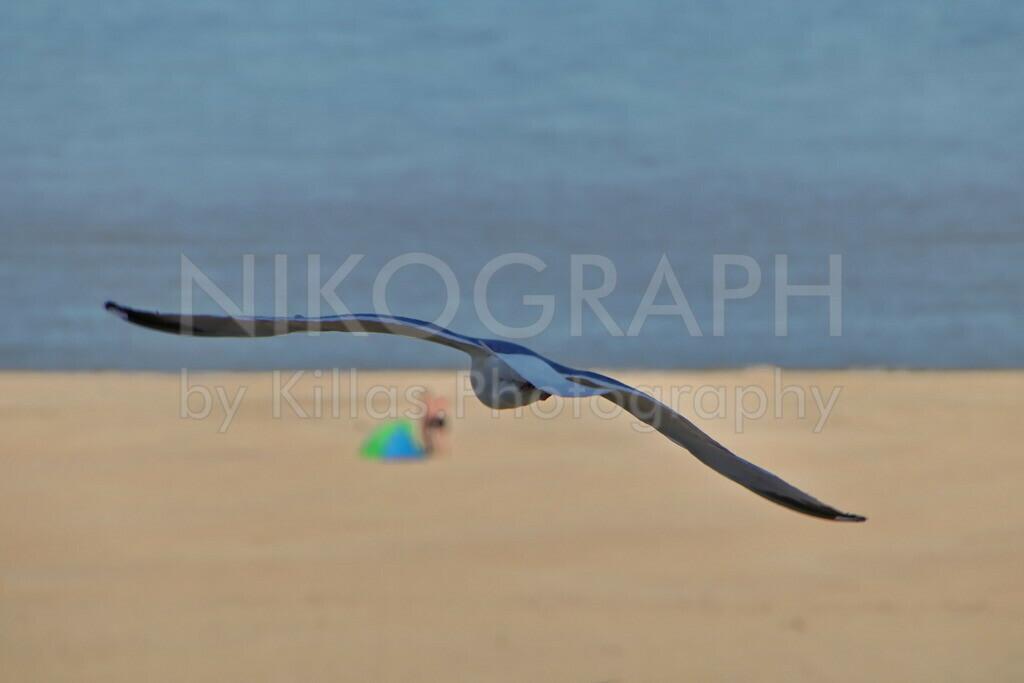 Möwe am Strand | Eine Möwe fliegt über den Strand der Nordseeinsel Texel.