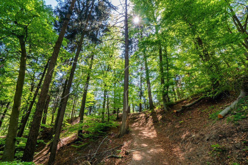 Bergisel | Im Wald am Panoramaweg Bergisel