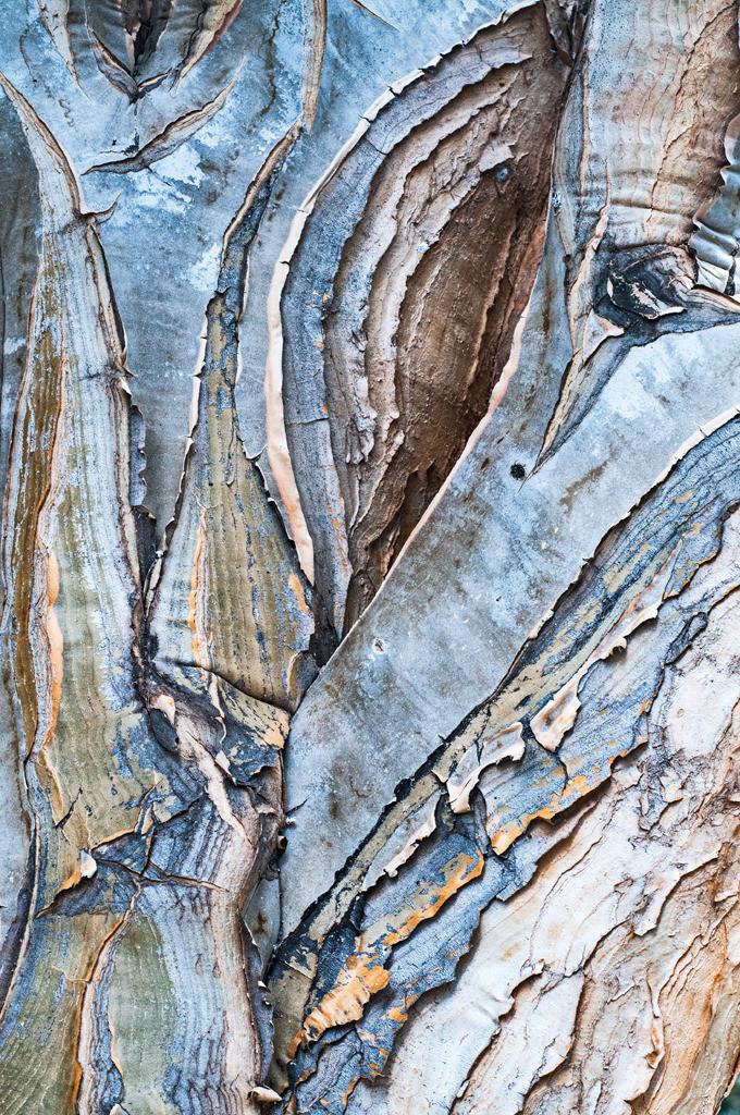 Pflanzenwelten | Triptychon Drachenbaum-Aloe I - 3 | Best. Nr. d_2012_05_0450 | Strukturierte Rinde einer Drachenbaum-Aloe, auch Köcherbaum genannt, in Blau- und Beigetönen. Einen Anwendungsvorschlag finden Sie hier: https://shop.soulimages.eu/img/5p6sfz (Besprechungszimmer oder Konferenzraum eines Unternehmens). Weitere Einrichtungsbeispiele sind in der Galerie