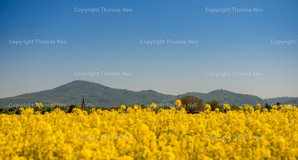 Panorama | Bensheim,Berghstrasse, wolkenloser Himmel, gelbe Rapsfelder, so sieht der Fruehling zur Teit an der Bergstrasse aus, ,, Bild: Thomas Neu