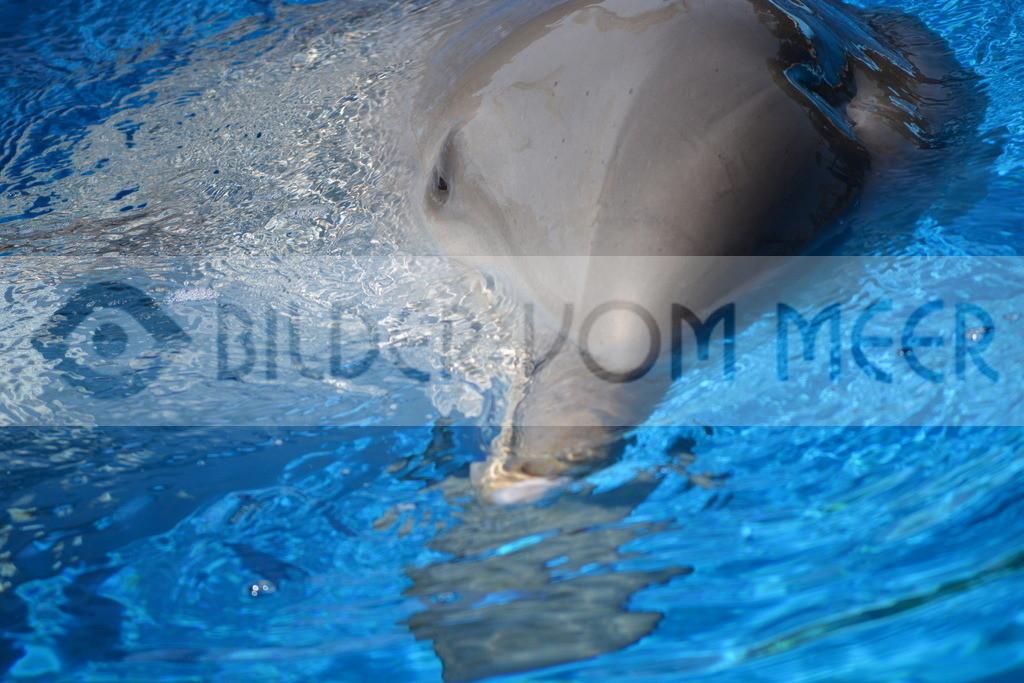 Delfin Bilder   Foto Delfin Spanien