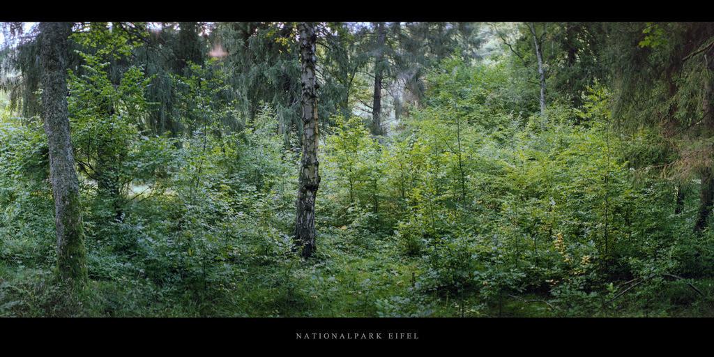 Nationalpark Eifel | Wald im Nationalpark und Mittelgebirge Eifel
