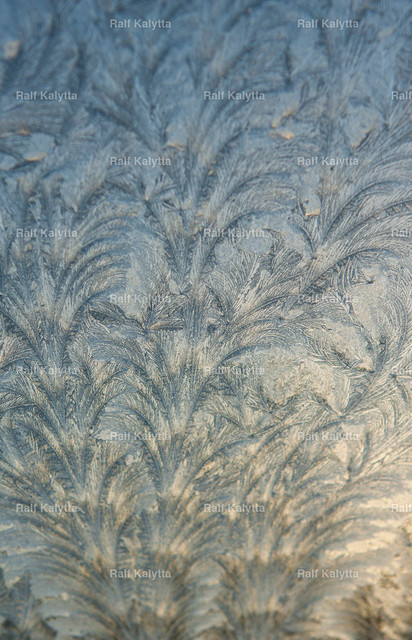 Ice flower | Crystal white frost pattern on a cold morning glass