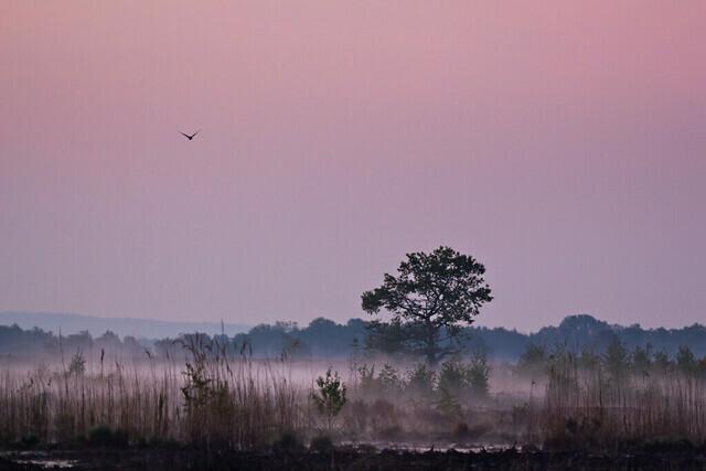 Morgennebel im Moor | Tagesanbruch nach einem nächtlichen Streifzug durch das Große Torfmoor.