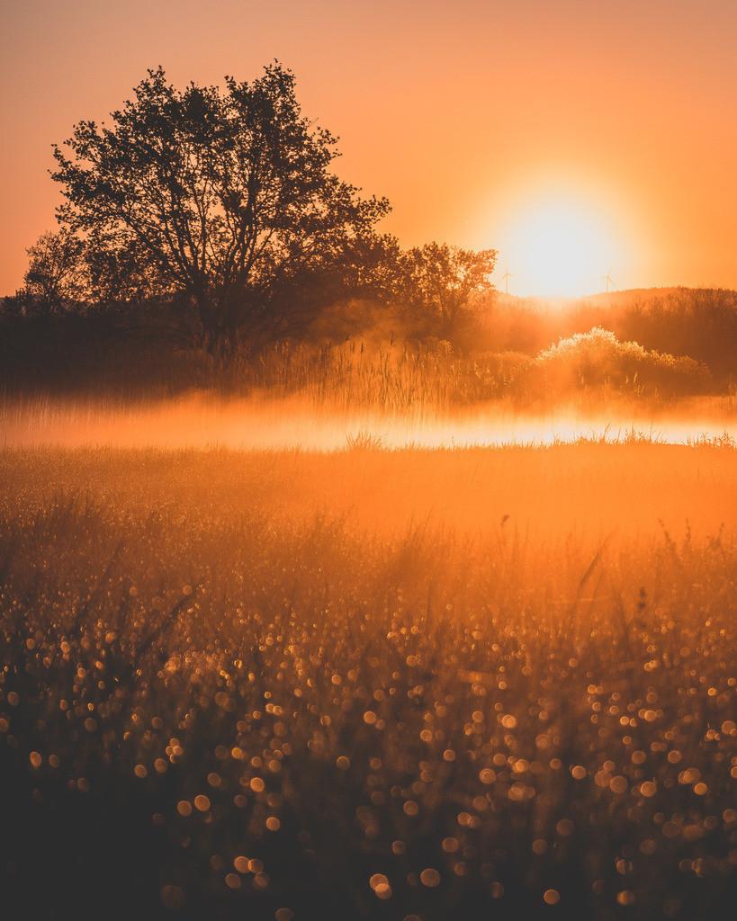 Frühlingsmorgen | Frühlingsmorgen im Ried