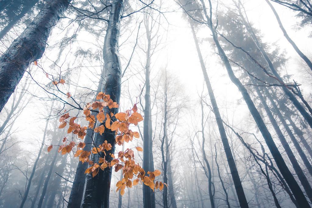 Nebelstimmung, Taunus | Die Serie 'Deutschlands Landschaften' zeigt die schönsten und wildesten deutschen Landschaften.