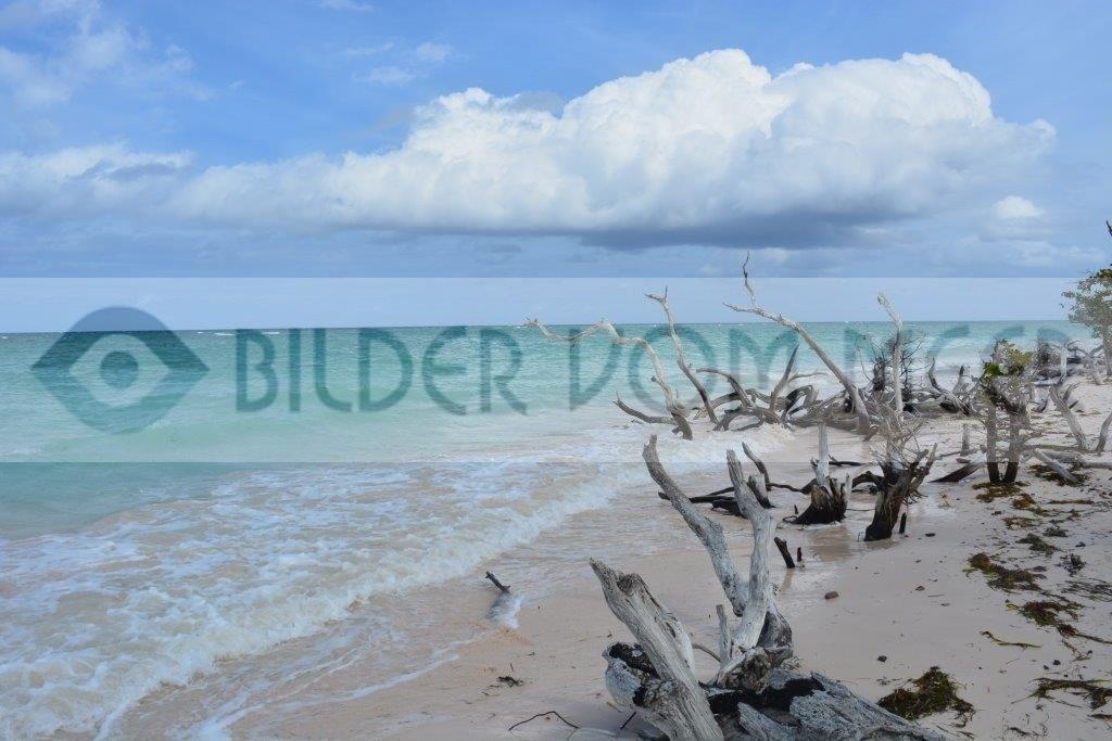 Bilder vom Meer: unberührte Strände   Bollwerk aus Holz gegen die Wellen
