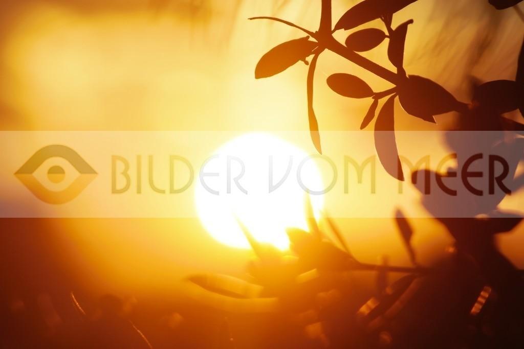 Bilder Sonnenuntergang | Sonnenuntergang inder Steppe, Spanien