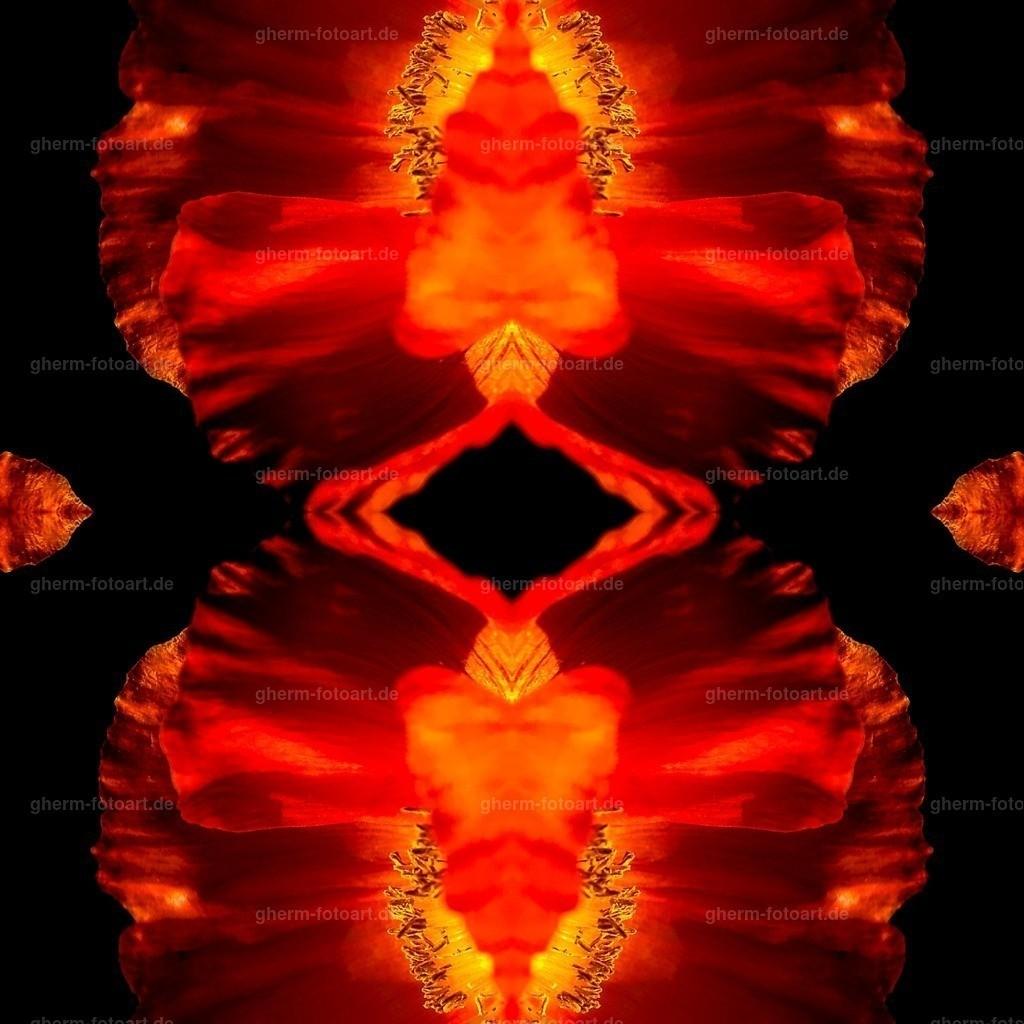 IMG00156-LR-korr-q-lmnr-kaleidoskop-6