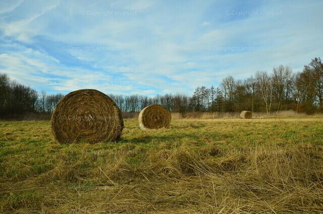 Strohballen in einm Feld | Ländliche Stimmung mit Strohballen auf einem Feld