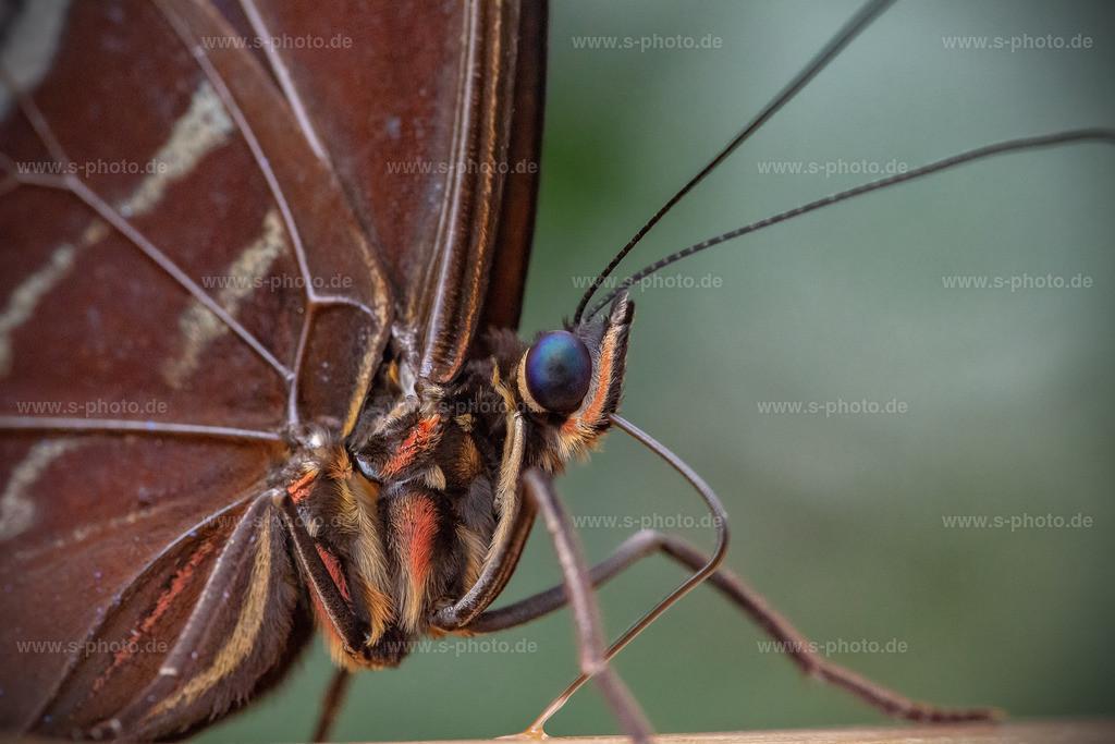 Marko eines Schmetterling