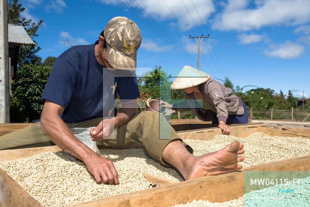 MW04115-FF | Laos | Paksong | Reportage: Kaffeeproduktion in Laos | Gewaschene Kaffeebohnen werden in der Sonne getrocknet und aussortiert. In den Plantagen auf dem Bolaven-Plateau gedeihen Sträucher der Kaffeesorten Robusta und Arabica.  ** Feindaten bitte anfragen bei Mario Weigt Photography, info@asia-stories.com **
