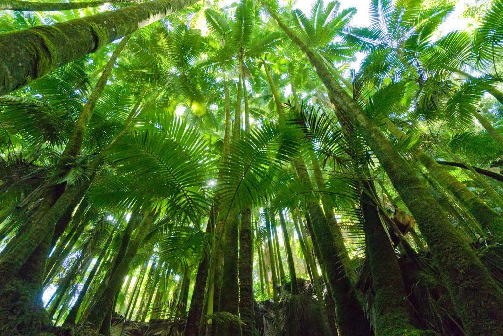 Familie 10 | Palmendach Tropical Botanical Gardens, Big Island, Hawai'i