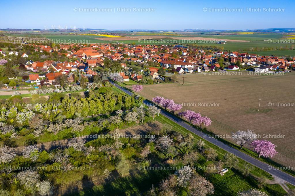 10049-50904 - Blütenpracht bei Dingelstedt