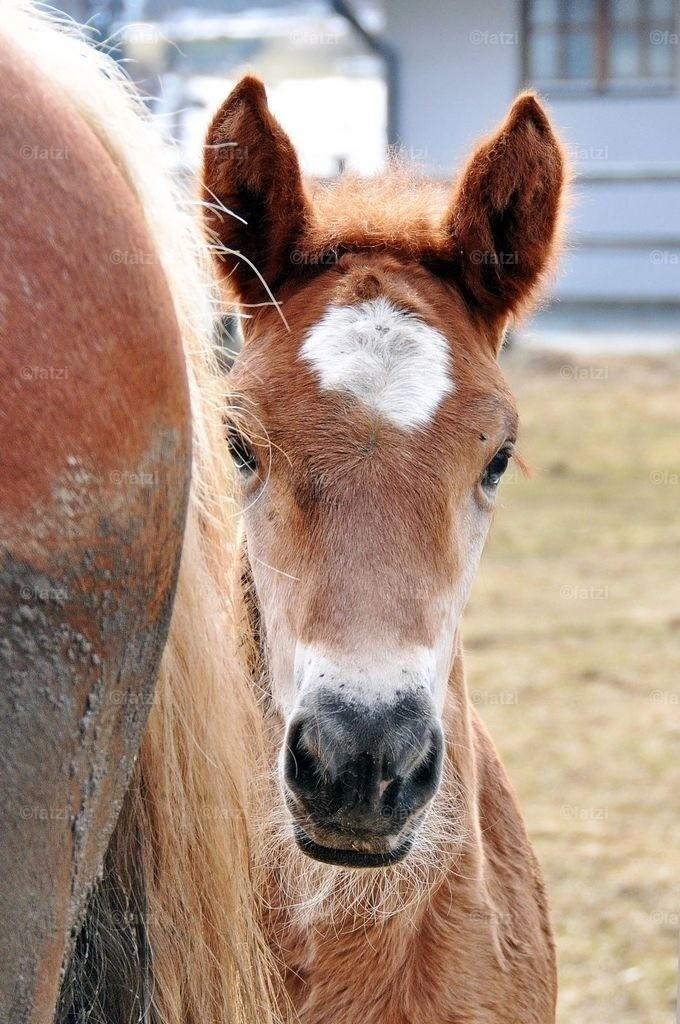 pferde-200310_097k