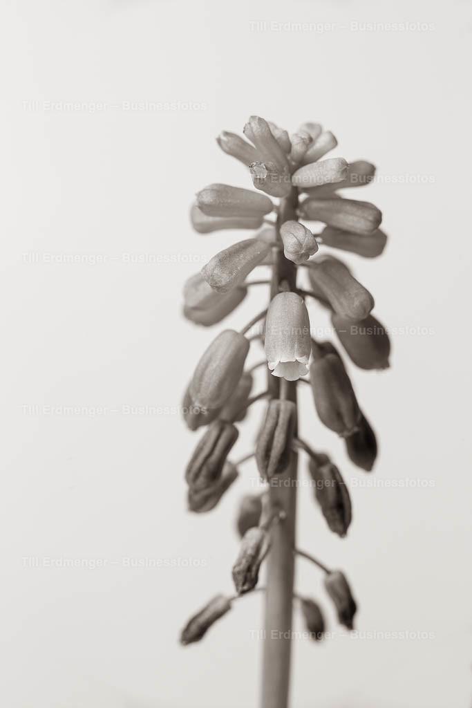 20200413_Frühlingsblüten_0003