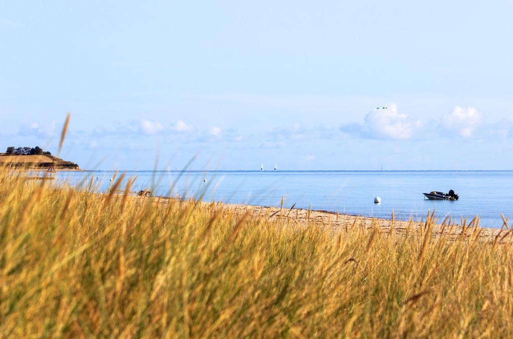 Schubystrand im Sommer | Standhafer am Sandstrand in Schubystrand