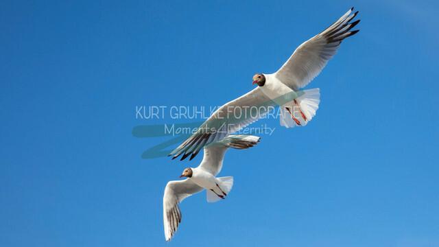 Tiere, Möwen am blauen Ostseestrand | Möwen am blauen Ostseestrand
