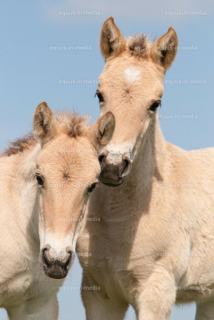 20100514-DSC_2310 | Henson Pferd Fohlen