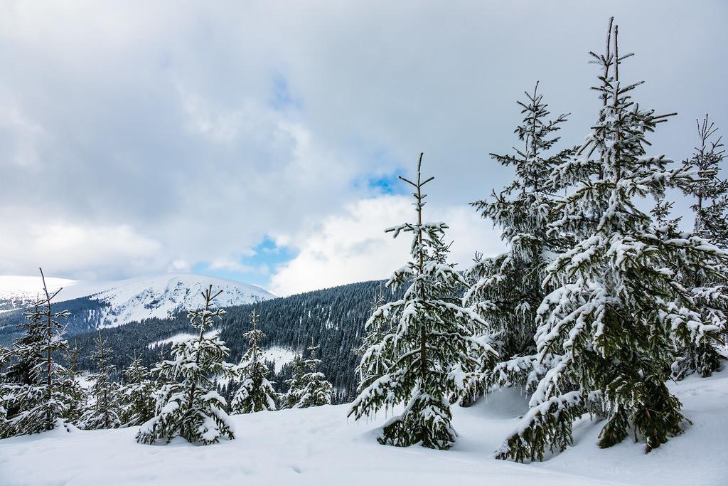 Winter im Riesengebirge bei Pec pod Snezkou, Tschechien   Winter im Riesengebirge bei Pec pod Snezkou, Tschechien.