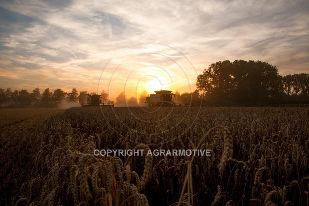 20120817-_MG_8723 | Weizenernte in der Dämmerung
