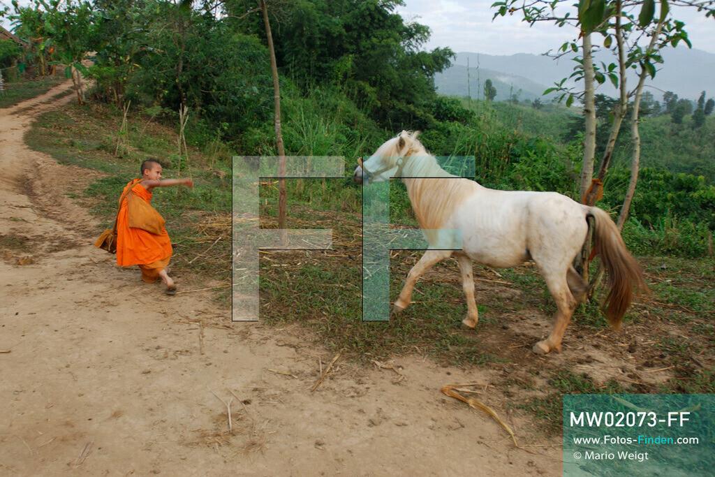 MW02073-FF   Thailand   Goldenes Dreieck   Reportage: Buddhas Ranch im Dschungel   Junger Mönch mit seinem Pferd   ** Feindaten bitte anfragen bei Mario Weigt Photography, info@asia-stories.com **