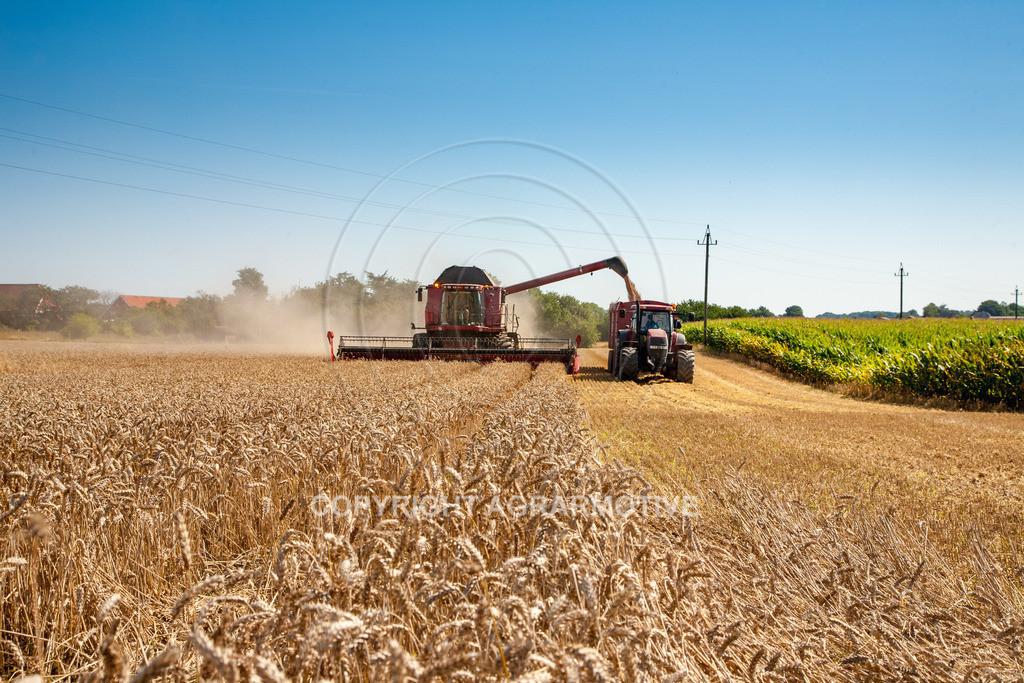 20110804_0334 | Mähdrescher bei der Weizenernte