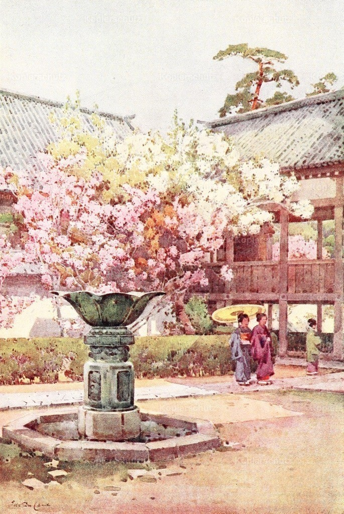 Du Cane_ Ella (1874-1943) - Flowers _ Gardens of Japan 1908 - Cherry blossom at Chion-in Temple
