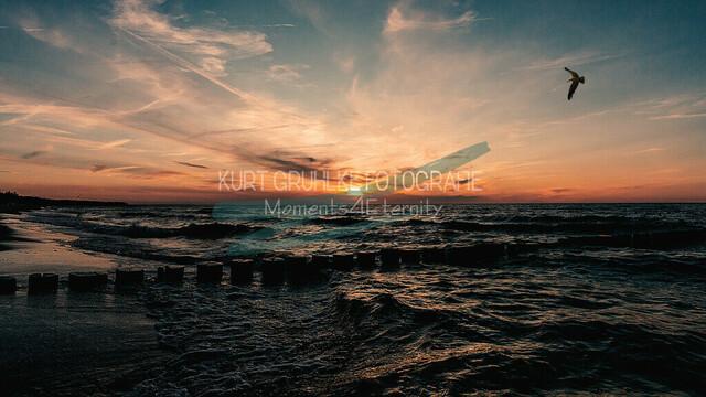 Ostsee, Sonnenuntergang an der Ostsee, Zingst mit Möwe | Sonnenuntergang an der Ostsee, Zingst mit Möwe