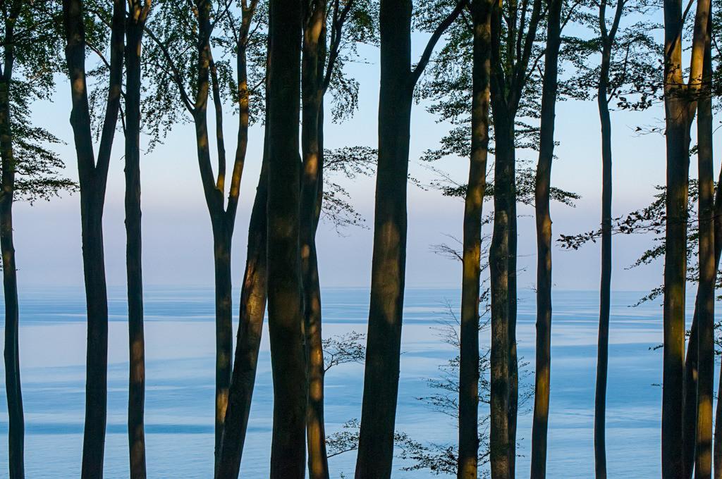 Best. Nr. BäumeGrün05 | Buchen auf den Kreiseklippen von Sassnitz, Rügen