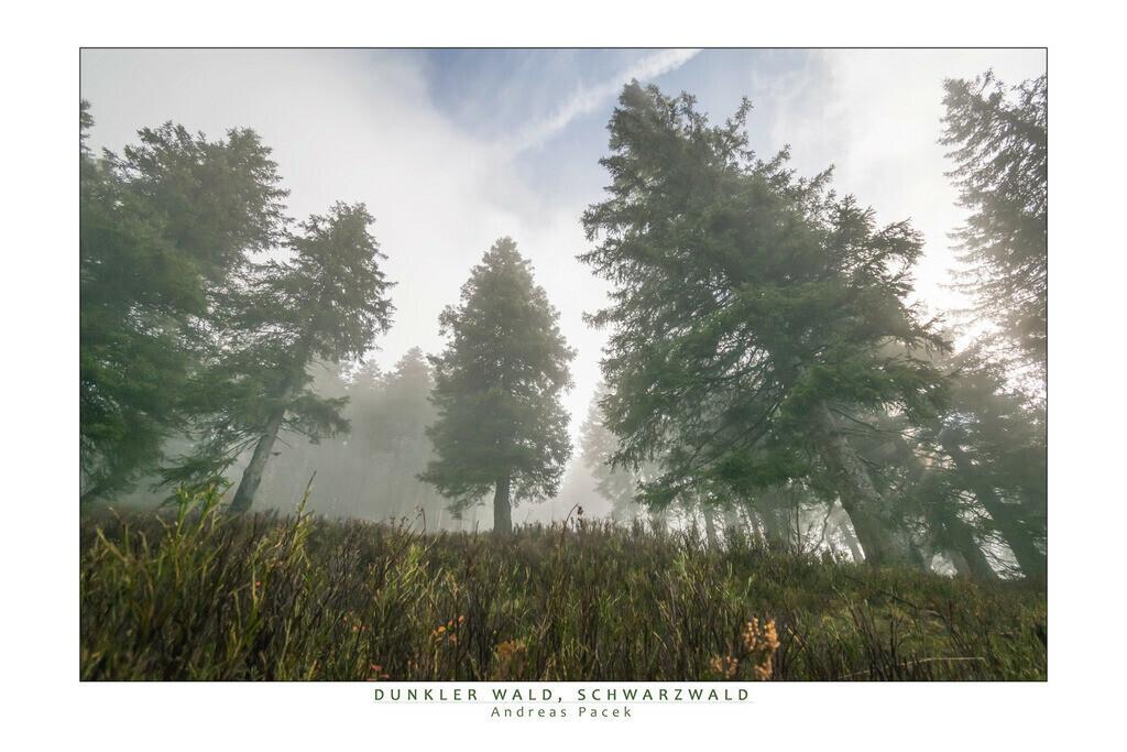 Dunkler Wald, Schwarzwald   Die Serie 'Deutschlands Landschaften' zeigt die schönsten und wildesten deutschen Landschaften.