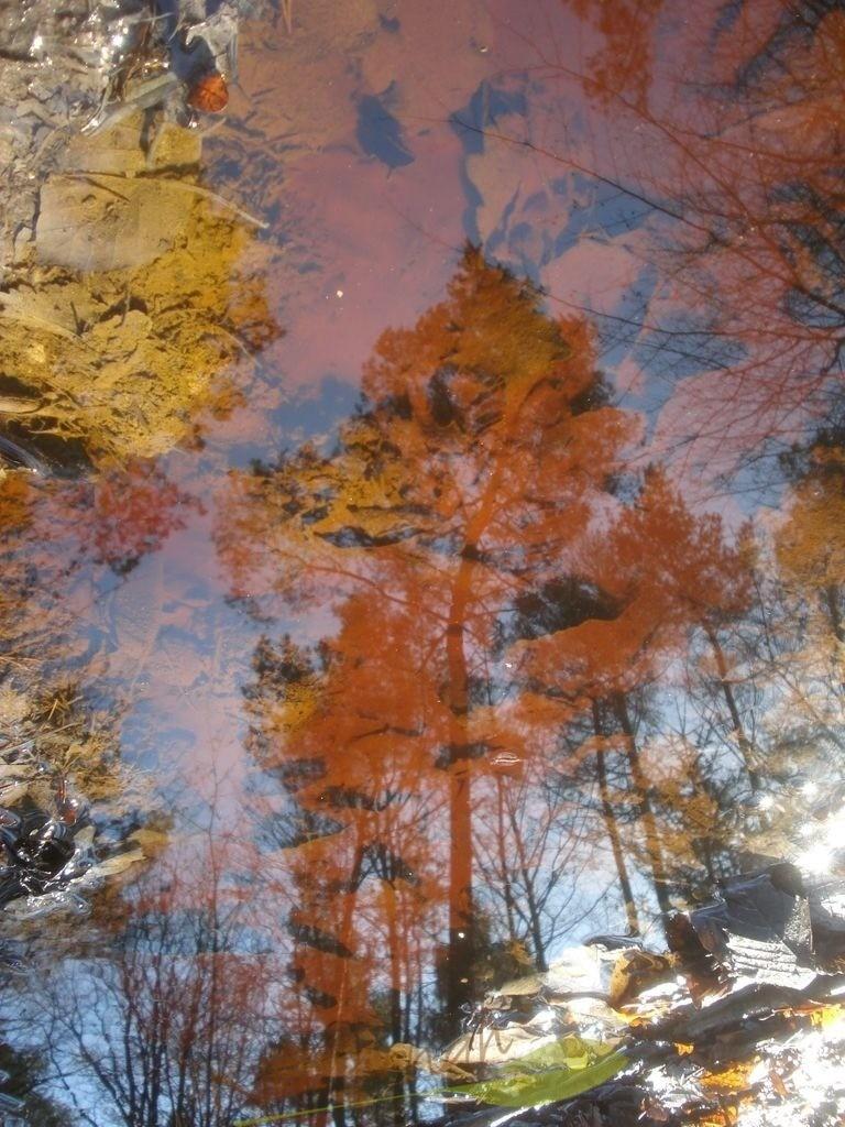 Natursymphonie | Wie wundervoll dieser Baum aus rostig rotem Grund emporsteigt. Weiter hinten noch mehr Bäume. Sie alle laden Dich ein in die farbenfrohe Symphonie der Natur: Balsam für Deine Seele und Fülle für Dein Herz!