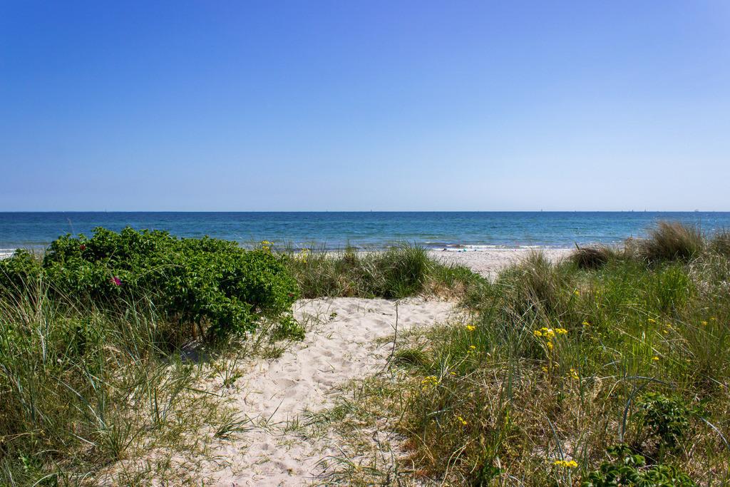 Strand in Kronsgaard   Weg zum Strand in Kronsgaard im Frühling