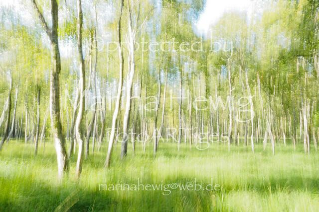 Wald(ICM)__MarinaHewig130592   OLYMPUS DIGITAL CAMERA