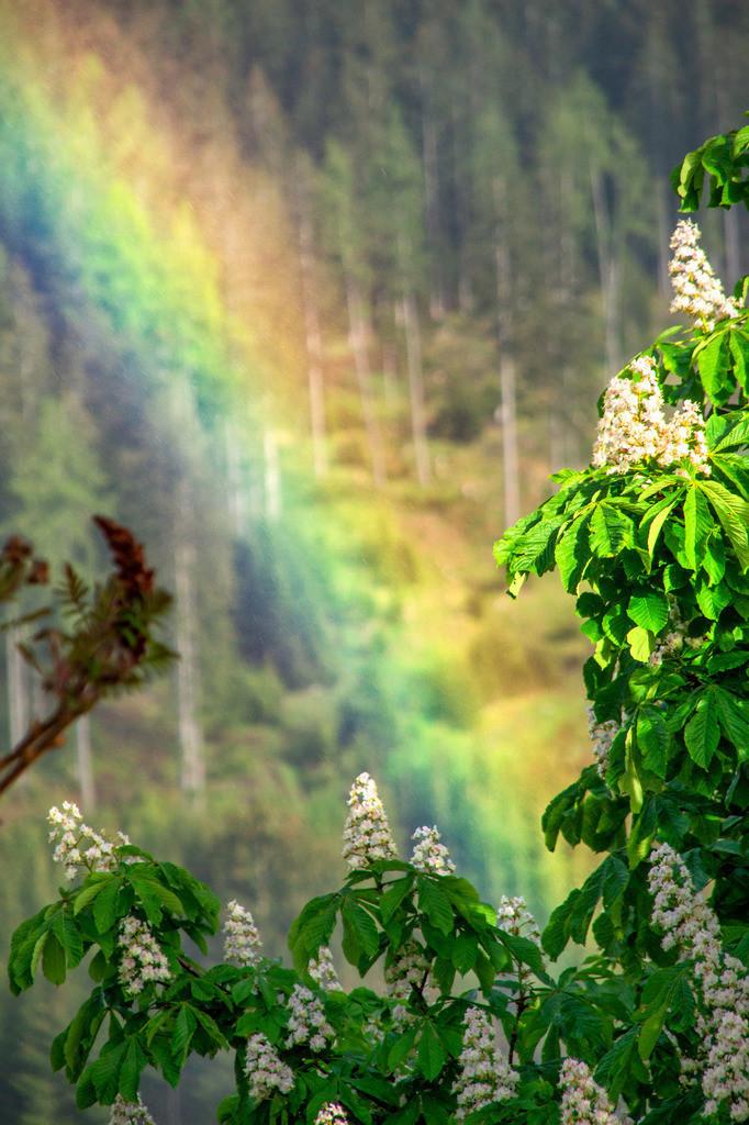 Regenbogen | Knappenberg