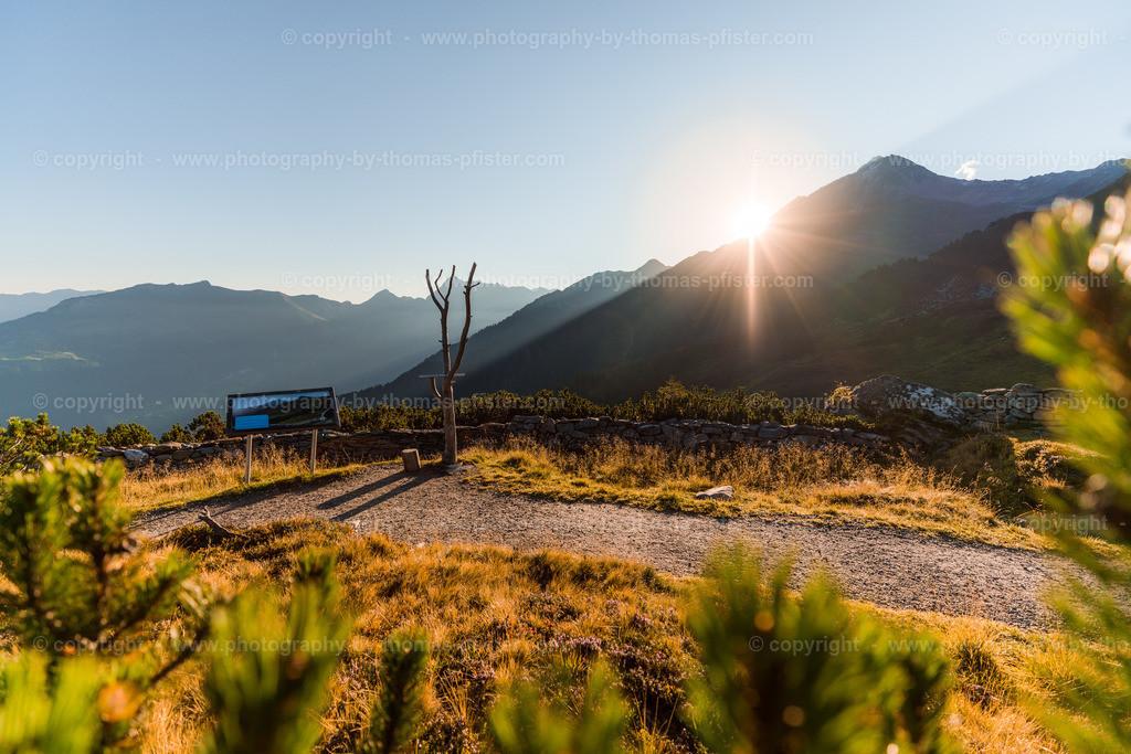 Ahorn Sonnenaufgang Spätsommer-30