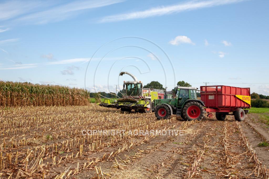 20080914-IMG_8927 | Silomais wird gehäckselt - AGRARFOTO Bilder aus der Landwirtschaft