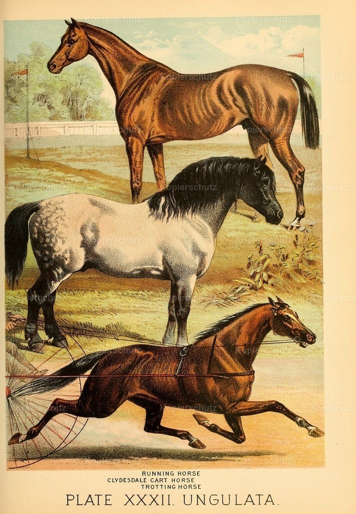 Johnson_s- Household-Book- of-Nature-1880-(33)