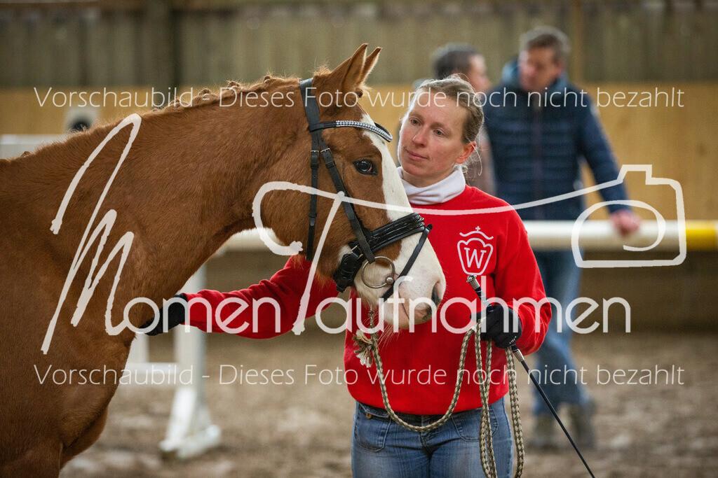 Freispringen-Pony-3j-42