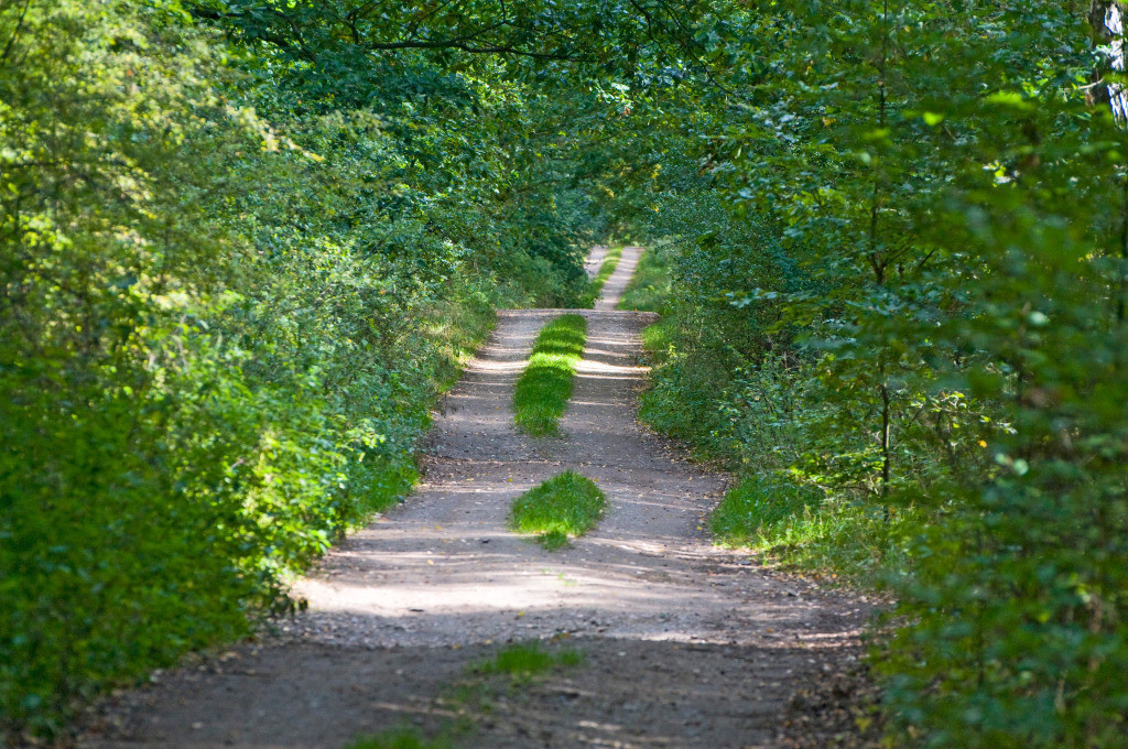 Best. Nr. lebensweg01 | Waldweg durch dichten Laubwald