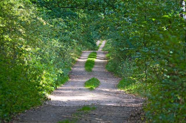 Lebensweg 01 |  Waldweg Waren, Mecklenburg-Vorpommern
